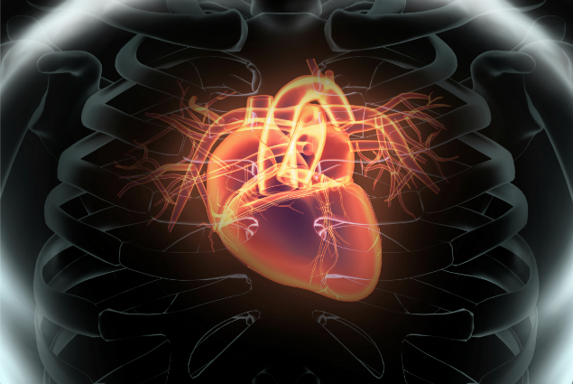 Human_heart_x-ray_style_imagex635.png